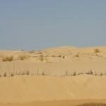 Majestueux désert de l\'Oued