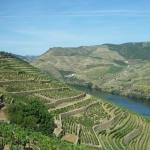 Merveilleux vignoble de Porto