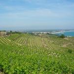 Superbe vignoble de Collioure